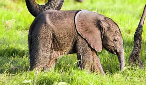 סין: המשטרה חילצה פיל שנפל לבור