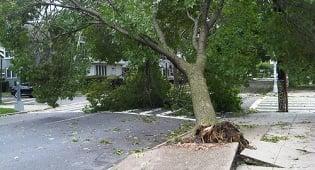 """אחרי המבול. ניו-יורק, היום (צילום: אתר חב""""ד COL)"""
