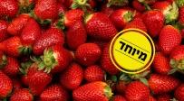 אוהבים תותים? צפו וגלו מה באמת יש בהם