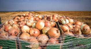 פסח בא: צפי למחסור בבצל, ביצים וחמאה