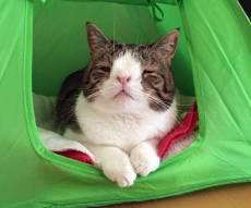 מונטי - חתול וויראלי: כוכב הרשת לוקה בתסמונת