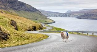 גוגל לא מגיעה? התושבים רתמו את הכבשים
