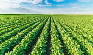סכסוך משפחתי בזכויות המשק החקלאי. אילוסטרציה