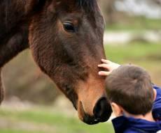 הכשרת רכיבה טיפולית: לעזור לילדים ונוער. אילוסטרציה - הכשרת רכיבה טיפולית: לעזור לילדים ונוער