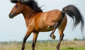 צפו: לא כדאי להתעסק עם סוסים