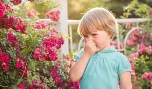די כבר: 4 דרכים לנצח אלרגיה אביבית