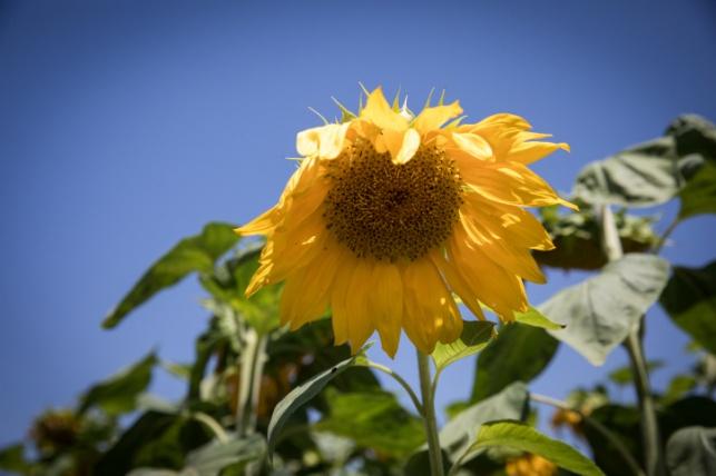 התחזית: עלייה בטמפרטורות, חם מהרגיל