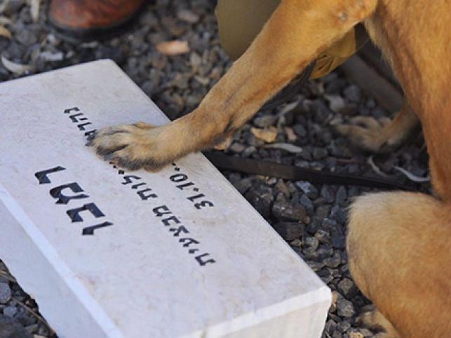 כלב היחידה על קבר חברו