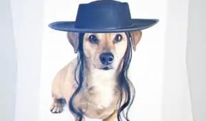 אחד הכלבים בסרטון