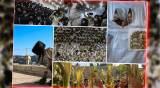 עשר התמונות שמסכמות את 'סוכות' • צפו