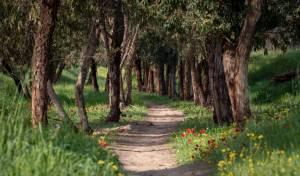 יוצאים לטייל? שמרו על הטבע בארצנו היפה