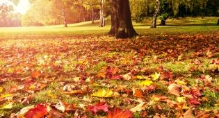 מרתק: מדוע העלים משנים את צבעם בסתיו