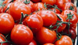 עגבניות טריות לאורך זמן