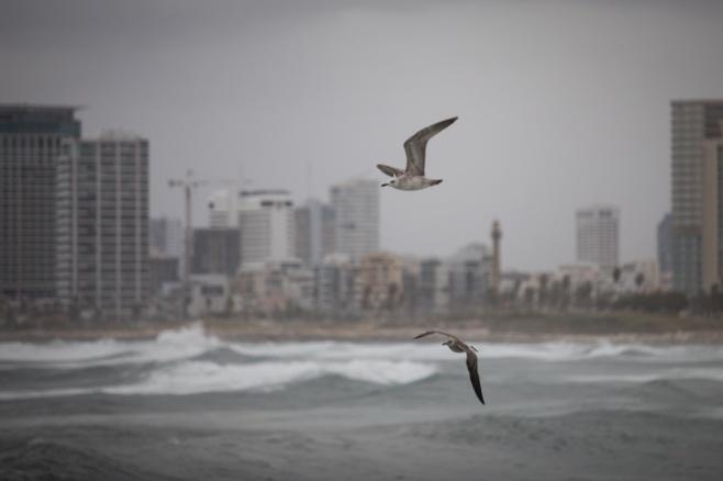 ים סערה וציפורים • גלריה חורפית מרהיבה