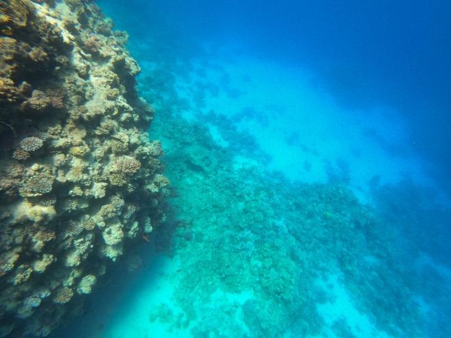 איזה צלילים מטריפים: צפו בצלילה בים סוף