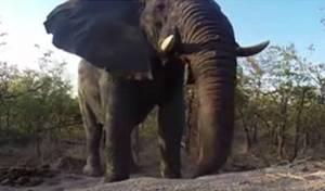 מבט מקרוב: פיל קם משינה עמוקה