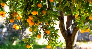 העץ עמוס פירות - מראה על הישגים וחריצות
