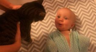 למקפידים: בקטע מופיעה אישה - משעשע: המפגש הראשון בין התינוק והחתול