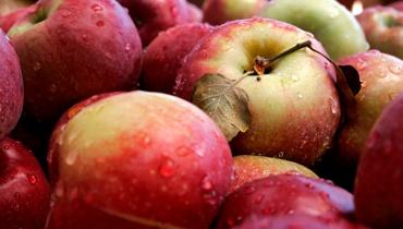 תפוחים (צילום: פלאש 90)