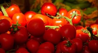 בגלל החום: היבול נפגע - והעגבניות יתייקרו
