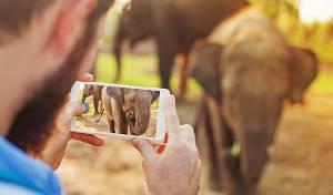 זה כנראה הפיל הכי ג'נטלמן שפגשתם