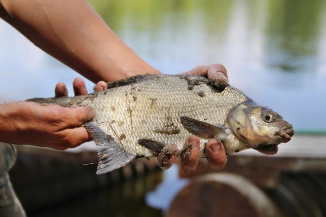דייג אוהב דגים? // הרב עמיהוד סלומון