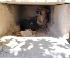 הכלב בתוך הקבר