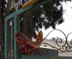 זעזוע: ראש חזיר נתלה בפתח בית הכנסת
