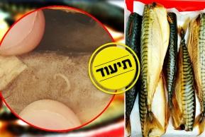 כמה תולעי 'אניסקיס' יש בדג מקרל? • צפו