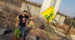 לבנוני שתל עץ בגבול - לבקשת נסראללה