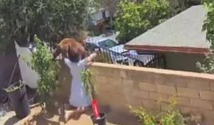 כך הדפה אשה דב שנכנס לחצר ביתה; צפו