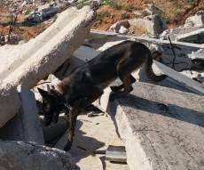 כלבי ההצלה לומדים לחפש לכודים בהריסות
