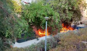 האש בוערת