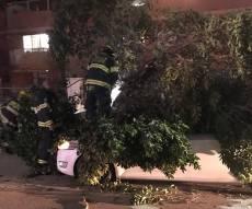 העץ שקרס בבית שאן על שני הנוסעים - הסופה החלה: עצים קרסו באלעד ובבני ברק