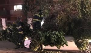 העץ שקרס בבית שאן על שני הנוסעים