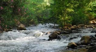 צמחיה מגוונת, מים זורמים ושלווה. נחל שניר - כל הנחלים הולכים אל הים, ואנחנו נהיה שם