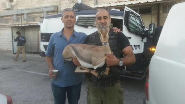 צבי מוגן נתפס אצל פלסטינים שגנבו נשק