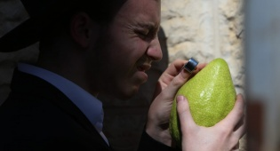 בלי בלעטל: בירושלים נערכים לחג הסוכות