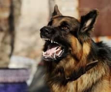 אילוסטרציה - בן 13 ננשך בצפון על ידי כלב משוטט וחוסן