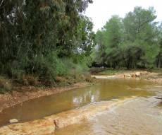אחרי הגשמים: צפו בנחלים שזורמים לירקון