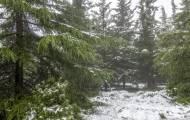 תחזית מזג האוויר: השלג יחזור לפנות בוקר