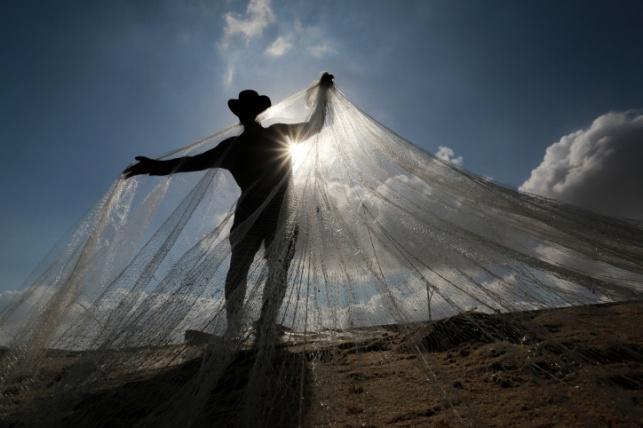 בגלל הזפת: אסור לשווק דגים מהים התיכון