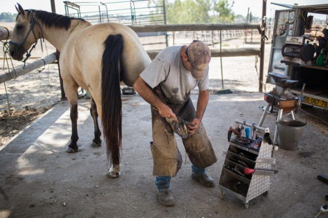 נעלי הסוסים • צפו בתהליך התקנת הפרסה