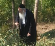 """המגיד הגאון רבי אריה שכטר ביערות קק""""ל גוזם סכך בכשרות אגודת ישראל בשנה שעברה"""