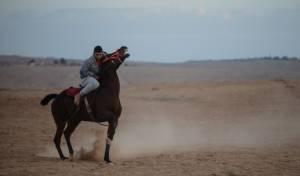 בדואים על סוסים במרחבי הנגב • גלריה