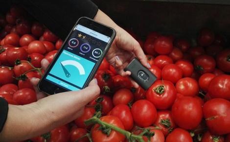 מסתבך בבחירת ירקות? האפליקציה תציל אותך