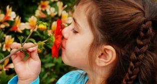 אילוסטרציה - דברים שלא ידעתם על חוש הריח