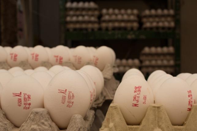 אושר ייבוא של כ-13 מיליון ביצים ללא מכס