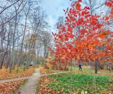 'סתיו הזהב' בפארק הגדול באירופה • מרהיב