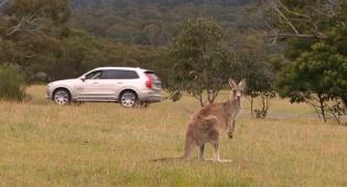 הקנגורו שמבלבל את הרכבים האוטונומיים